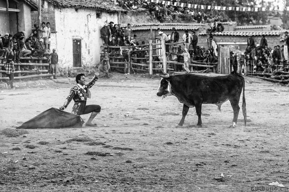 Final faceoff: a bull and a torero